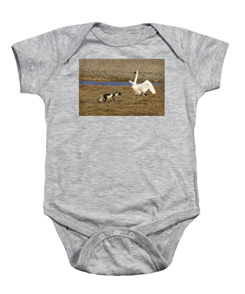 Fox Baby Onesie featuring the photograph Fox Vs Swan by Anthony Jones