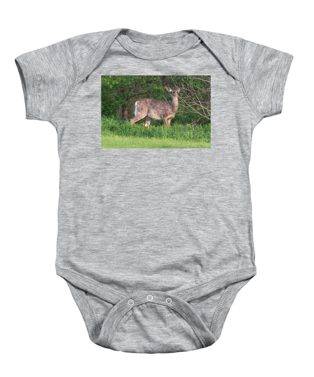 Doe Baby Onesie featuring the photograph Gazing Doe by Debbie Storie