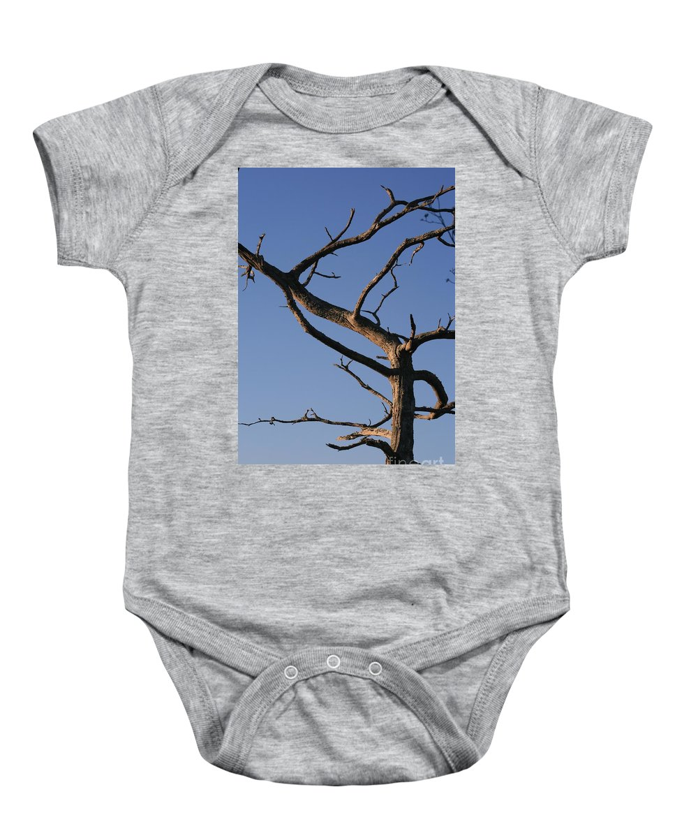 Tree Baby Onesie featuring the photograph Gnarly Tree by Nadine Rippelmeyer