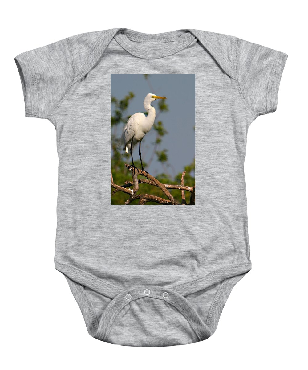 Great White Egret Bird Feathers Flying Florida Sanctuary Wildlife Photograph Photography Baby Onesie featuring the photograph Great White Egret Pose by Shari Jardina