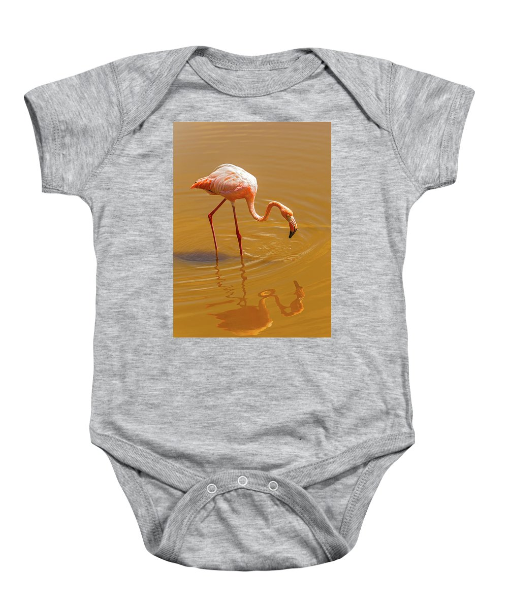 Flamingo Baby Onesie featuring the photograph Greater Flamingo In The Water At Galapagos Islands by Marek Poplawski