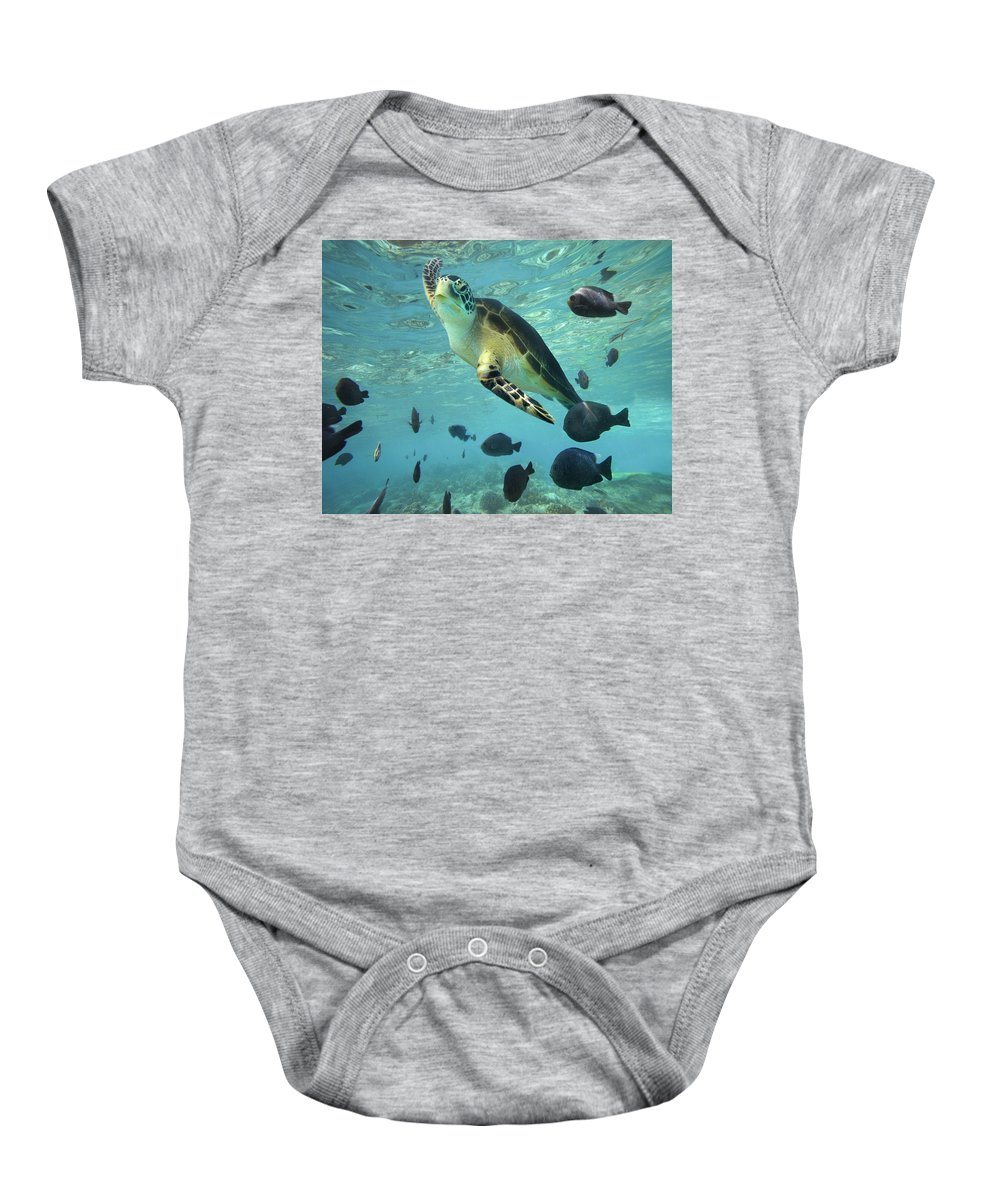 00451420 Baby Onesie featuring the photograph Green Sea Turtle Balicasag Island by Tim Fitzharris