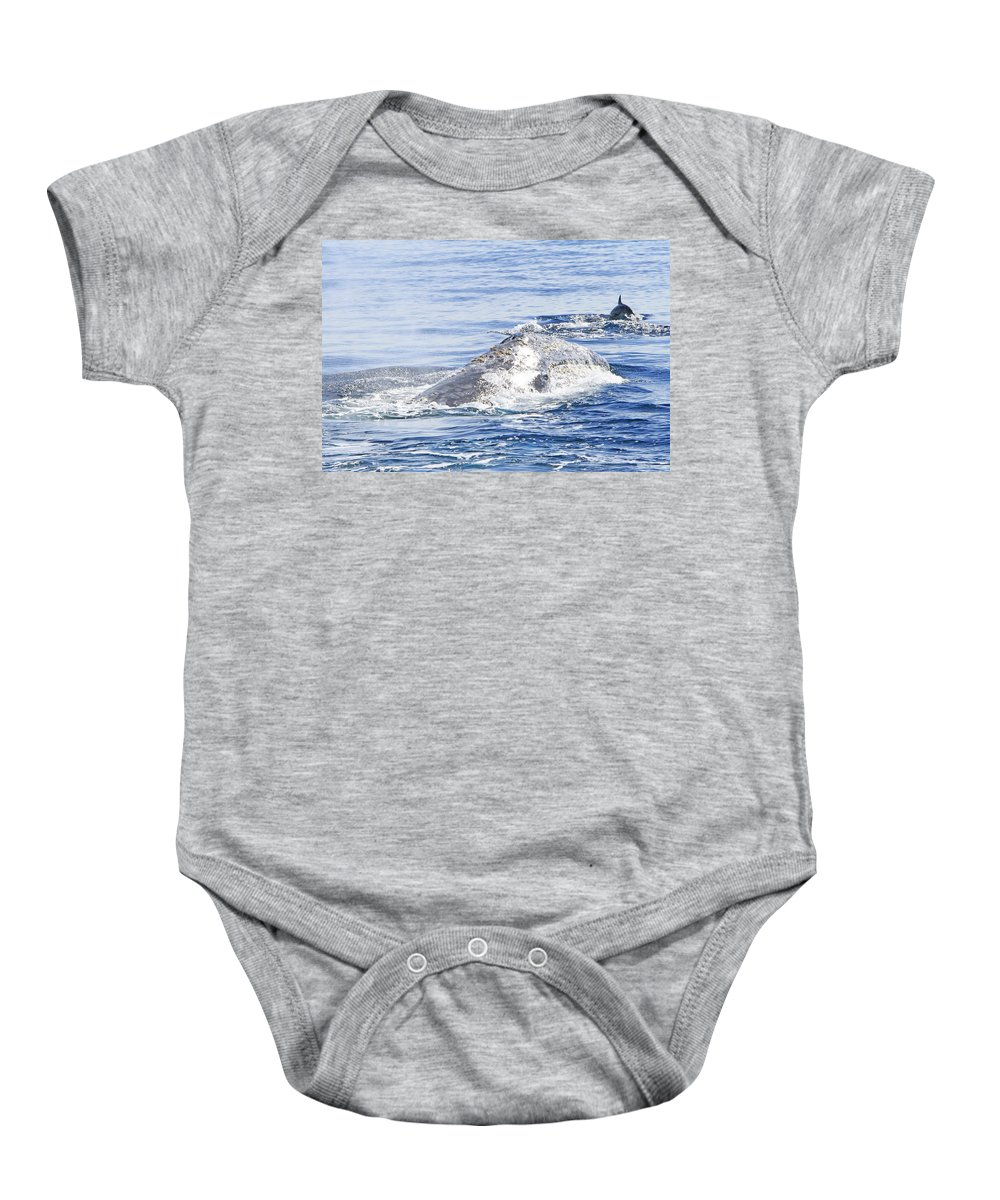 Grey Whale Baby Onesie featuring the photograph Grey Whale 2 by Shoal Hollingsworth