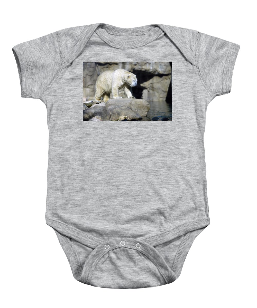 Memphis Zoo Baby Onesie featuring the photograph Habitat - Memphis Zoo by D'Arcy Evans