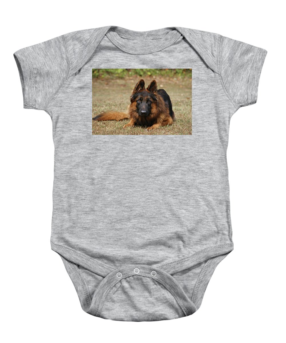 Dogs Baby Onesie featuring the photograph Handsome Fella by Sandy Keeton