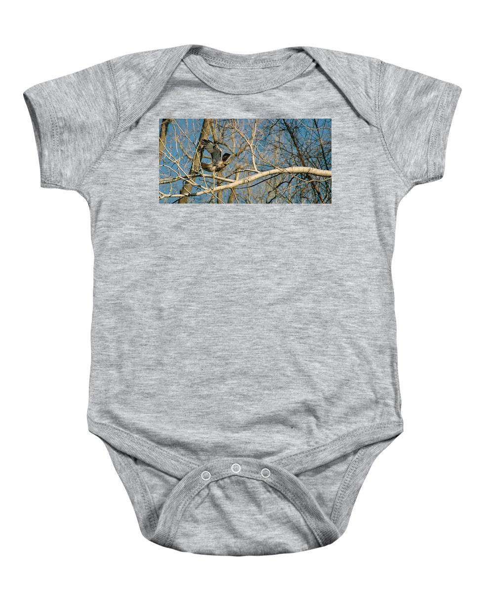 Hawk Baby Onesie featuring the photograph Hawk by Steve Karol