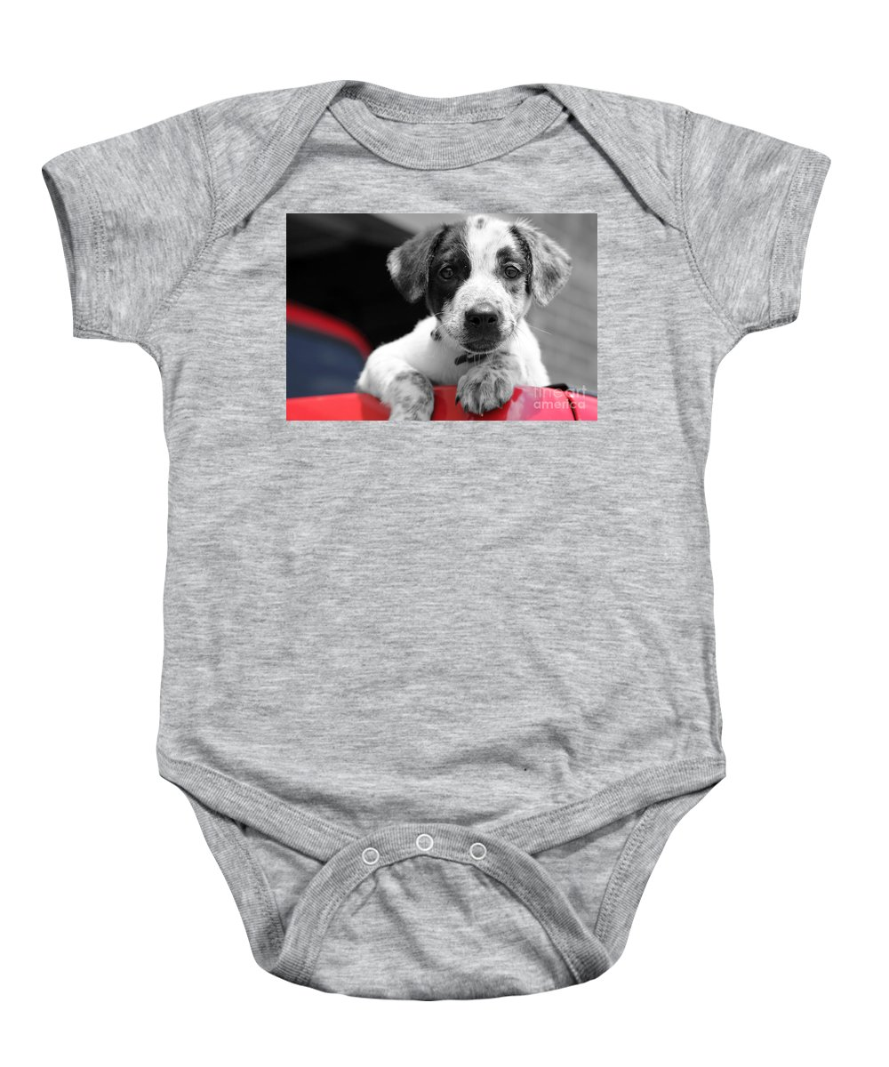 Dogs Baby Onesie featuring the photograph Hmmm by Amanda Barcon