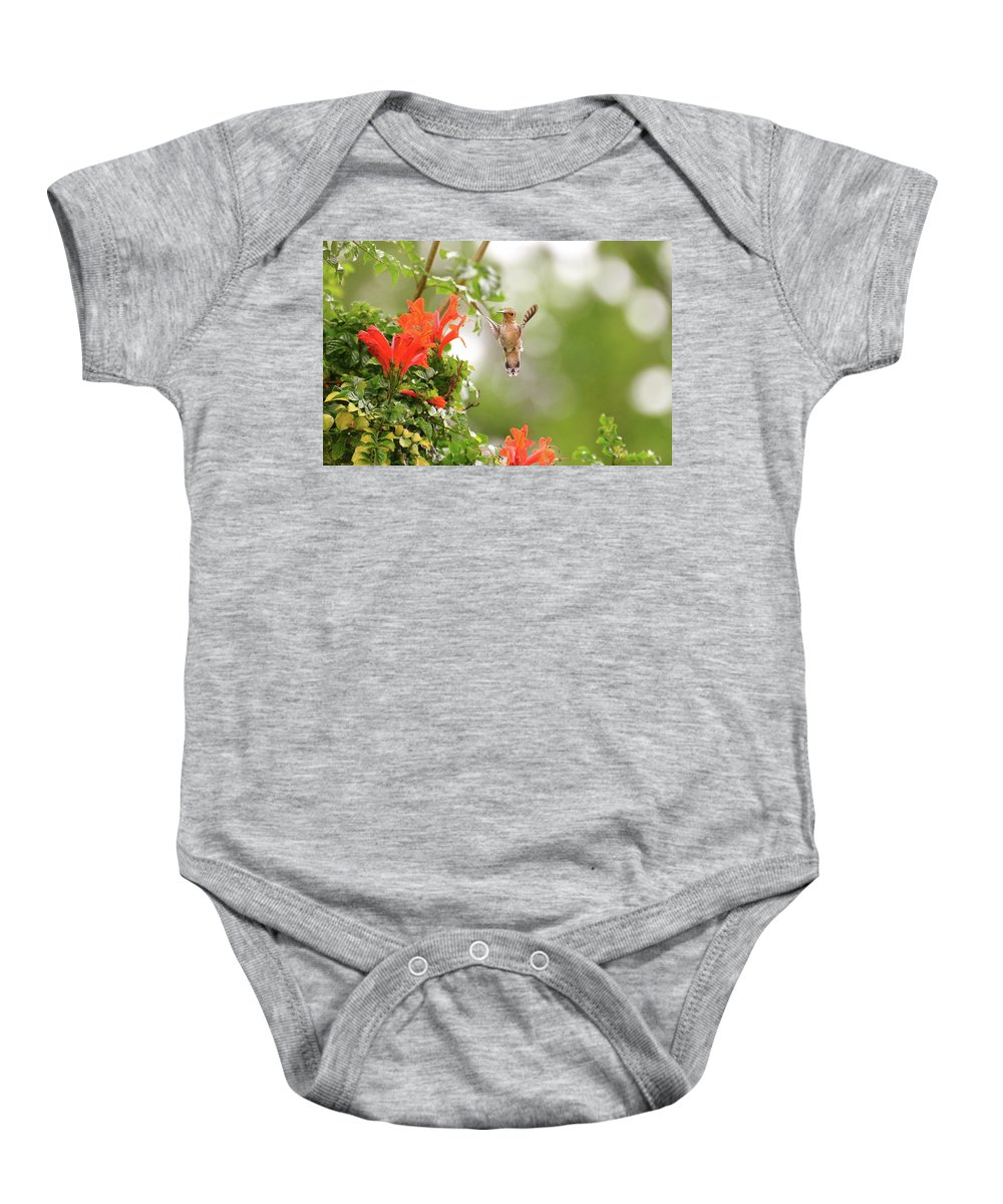 Hummingbirds Bird Baby Onesie featuring the photograph Honeysuckle Hummer by Lynn Bauer