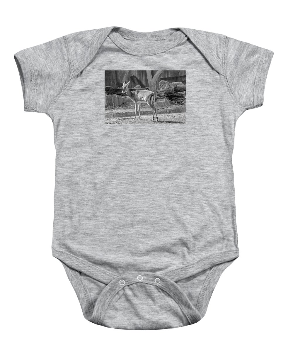 Impala Baby Onesie featuring the photograph Impala  Black And White by Susan McMenamin