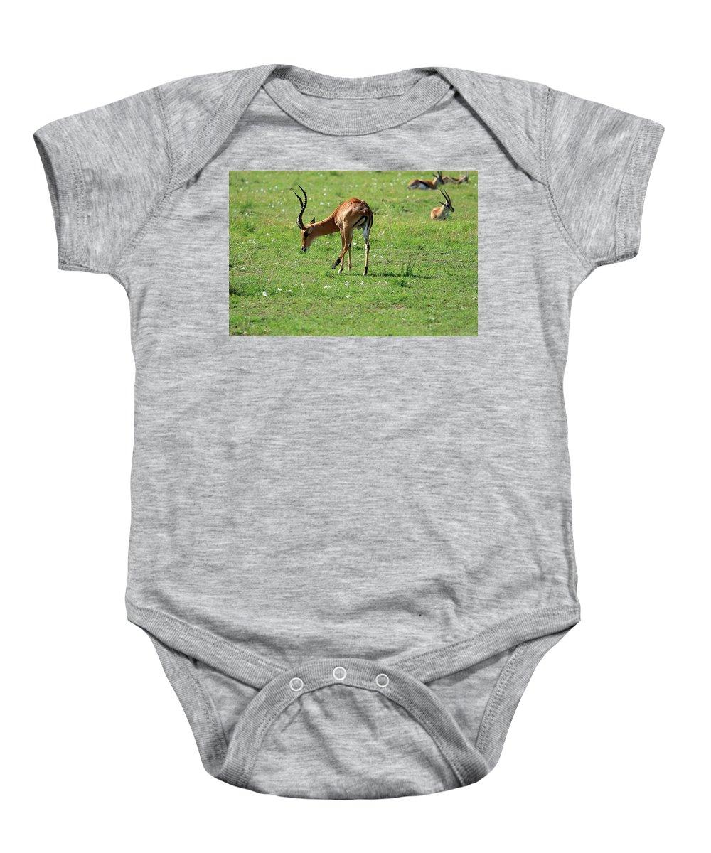 Deer Baby Onesie featuring the photograph Impala Buck by Aidan Moran