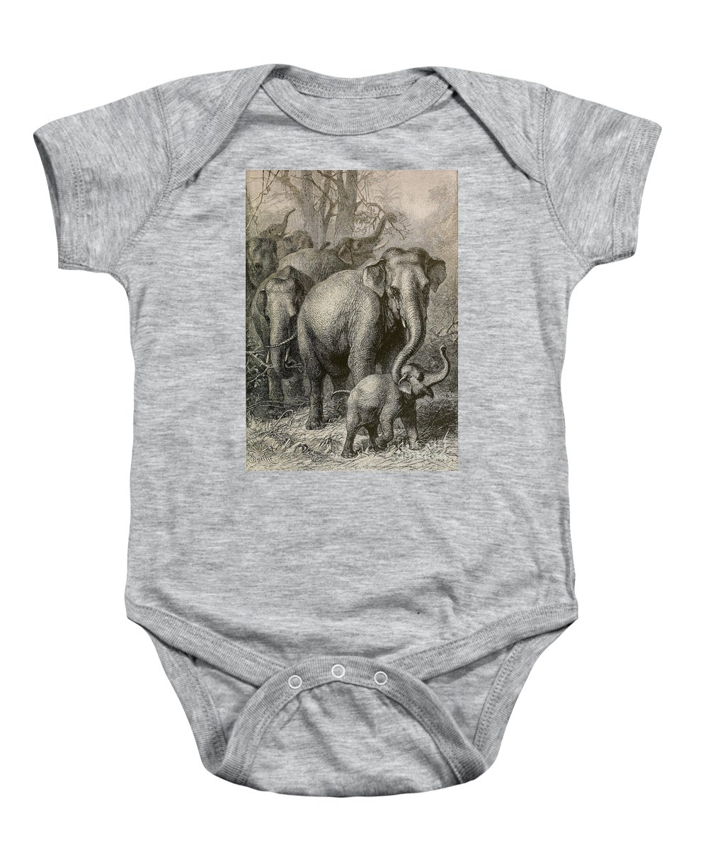 Indian Elephant Baby Onesie featuring the photograph Indian Elephant, Endangered Species by Biodiversity Heritage Library