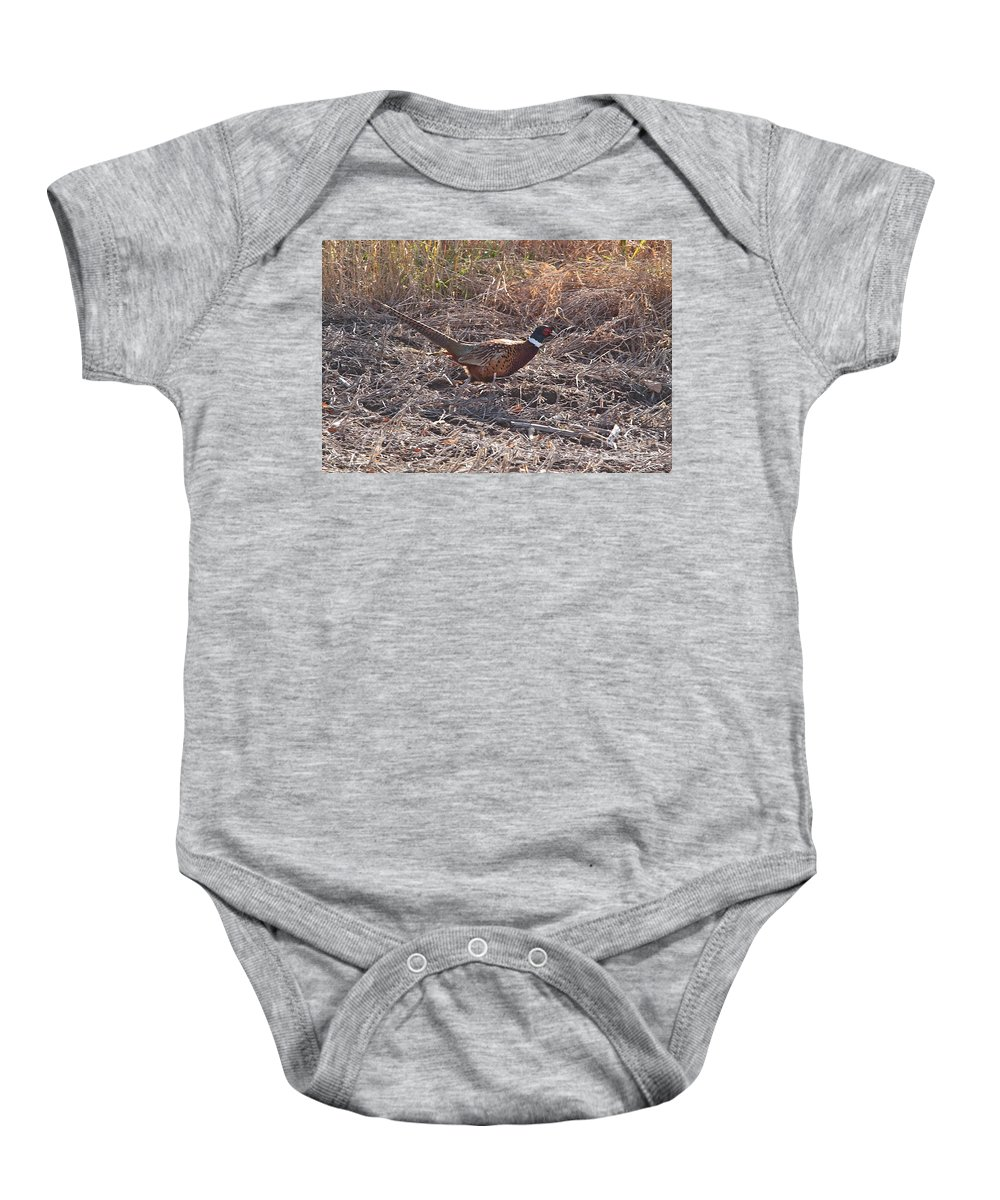 Wild Birds Ring Neck Phesant Wild Nature In Michigan Baby Onesie featuring the photograph Its A Ring Neck by Robert Pearson
