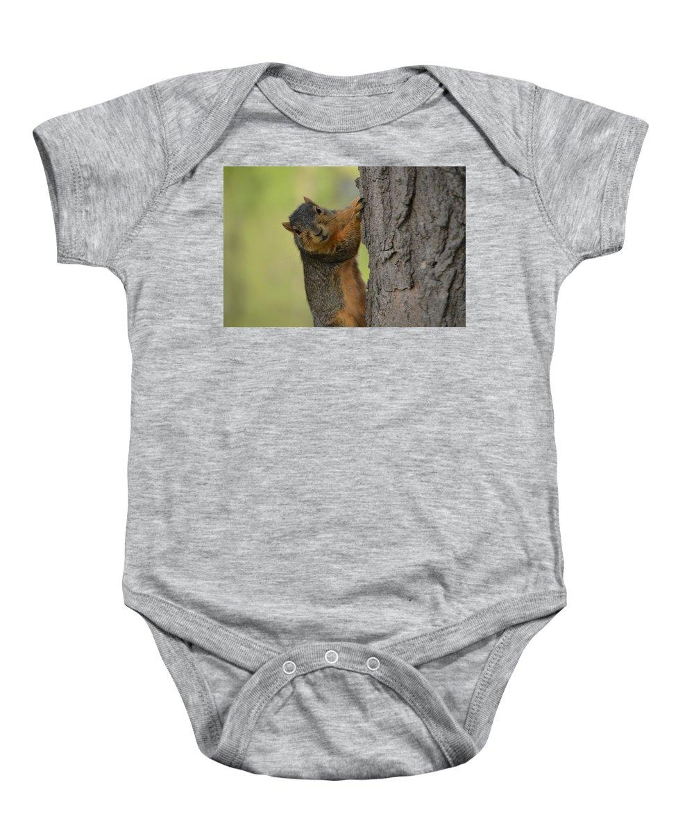 Squirrel Baby Onesie featuring the photograph Just Hanging Around by Belinda Stucki