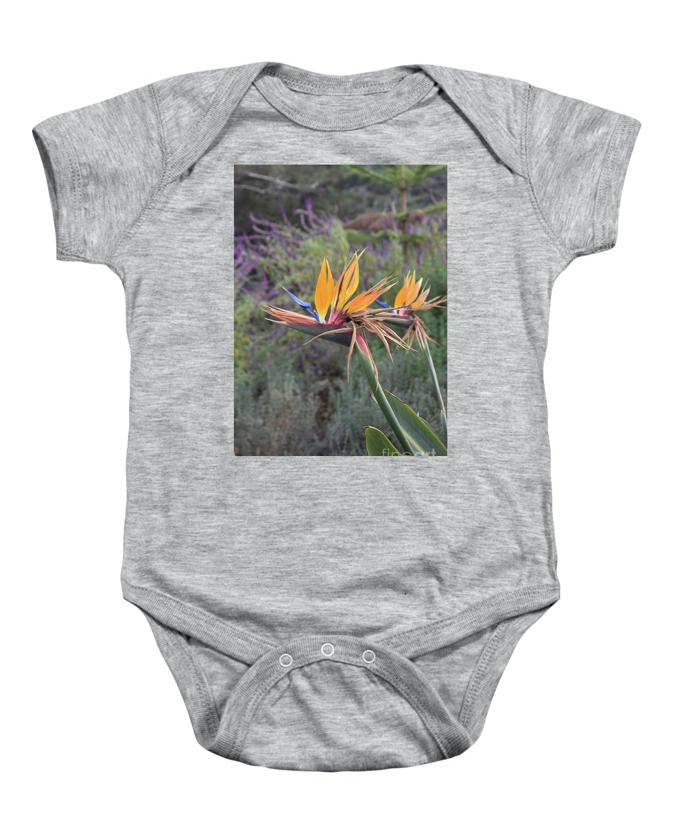 Bird-of-paradise Baby Onesie featuring the photograph Large Bird Of Paradise Flower In Full Bloom by DejaVu Designs