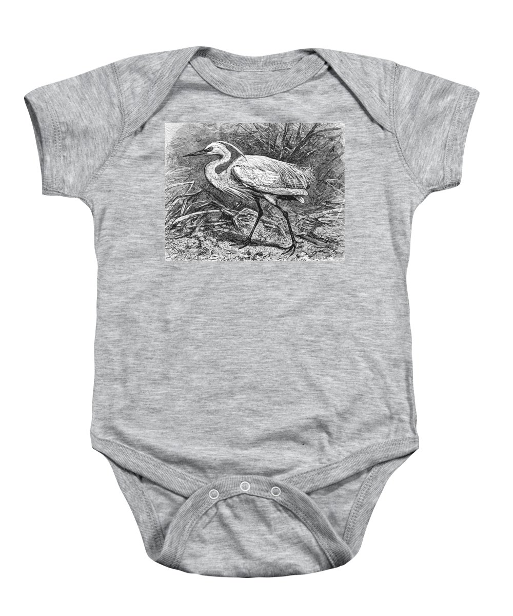 Biology Baby Onesie featuring the photograph Lesser Egret by Granger