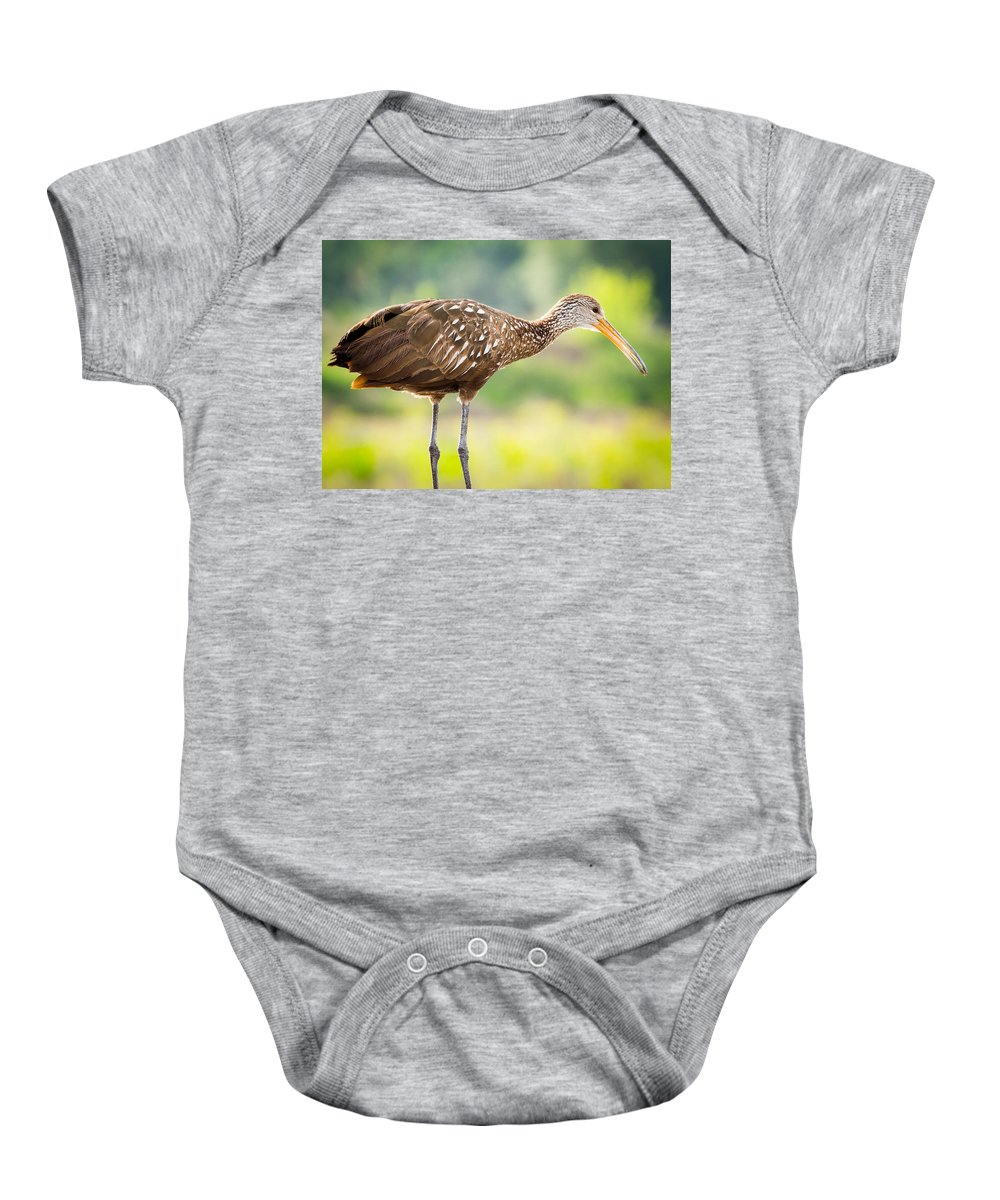 Celery Fields Baby Onesie featuring the photograph Limpkin At Celery Fields by Richard Goldman