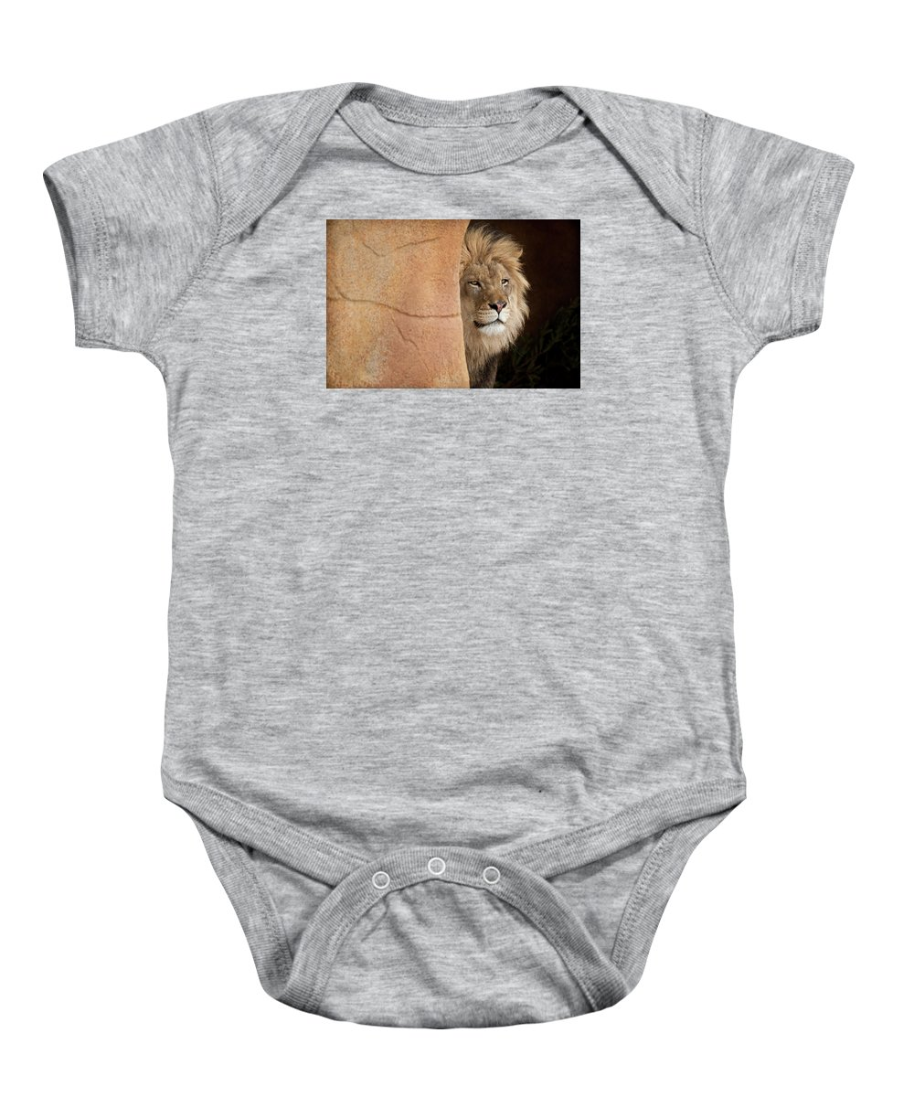 Lion Baby Onesie featuring the photograph Lion Emerging  Captive by Steve Gadomski