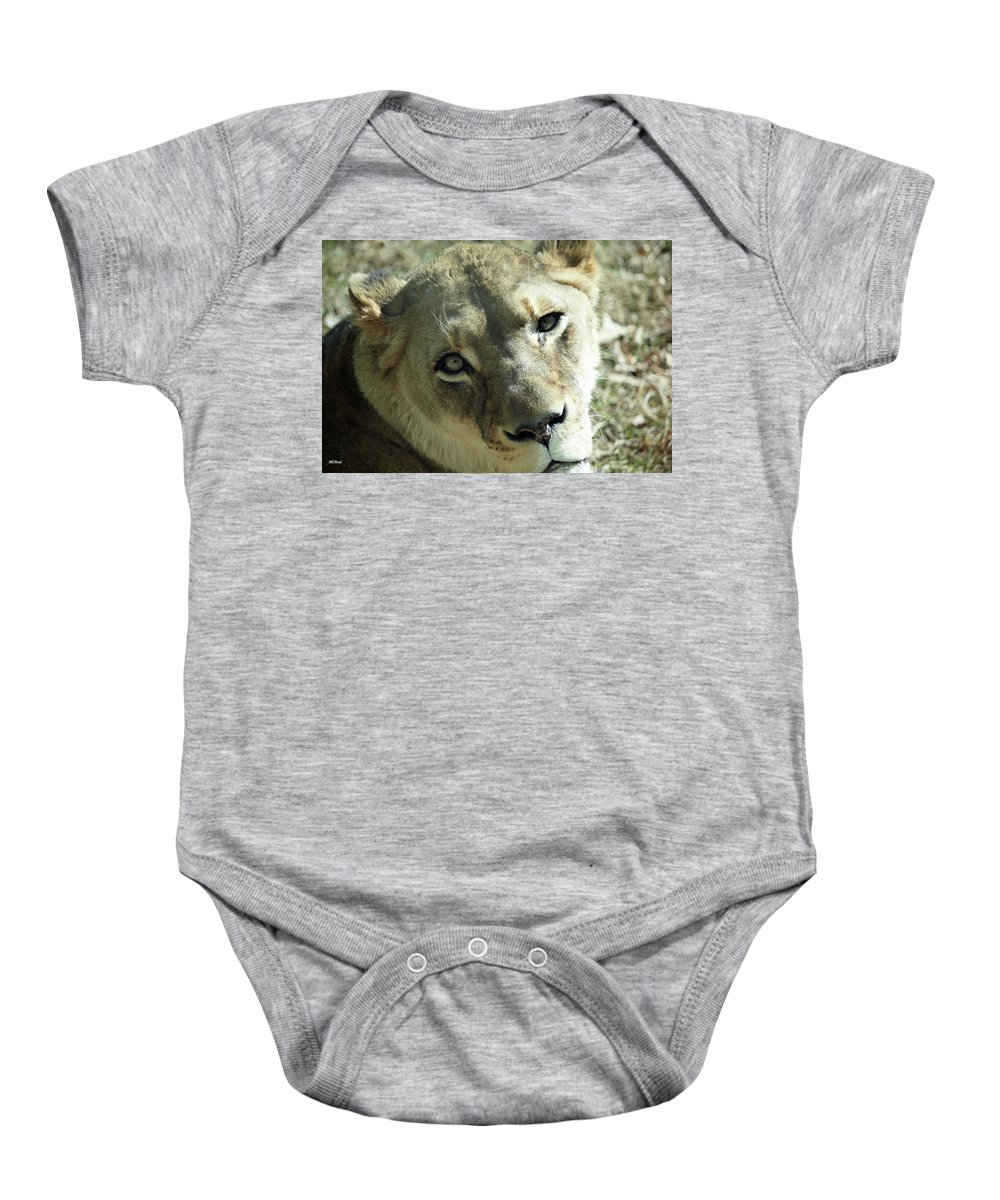Maryland Baby Onesie featuring the photograph Lioness Up Close by Ronald Reid