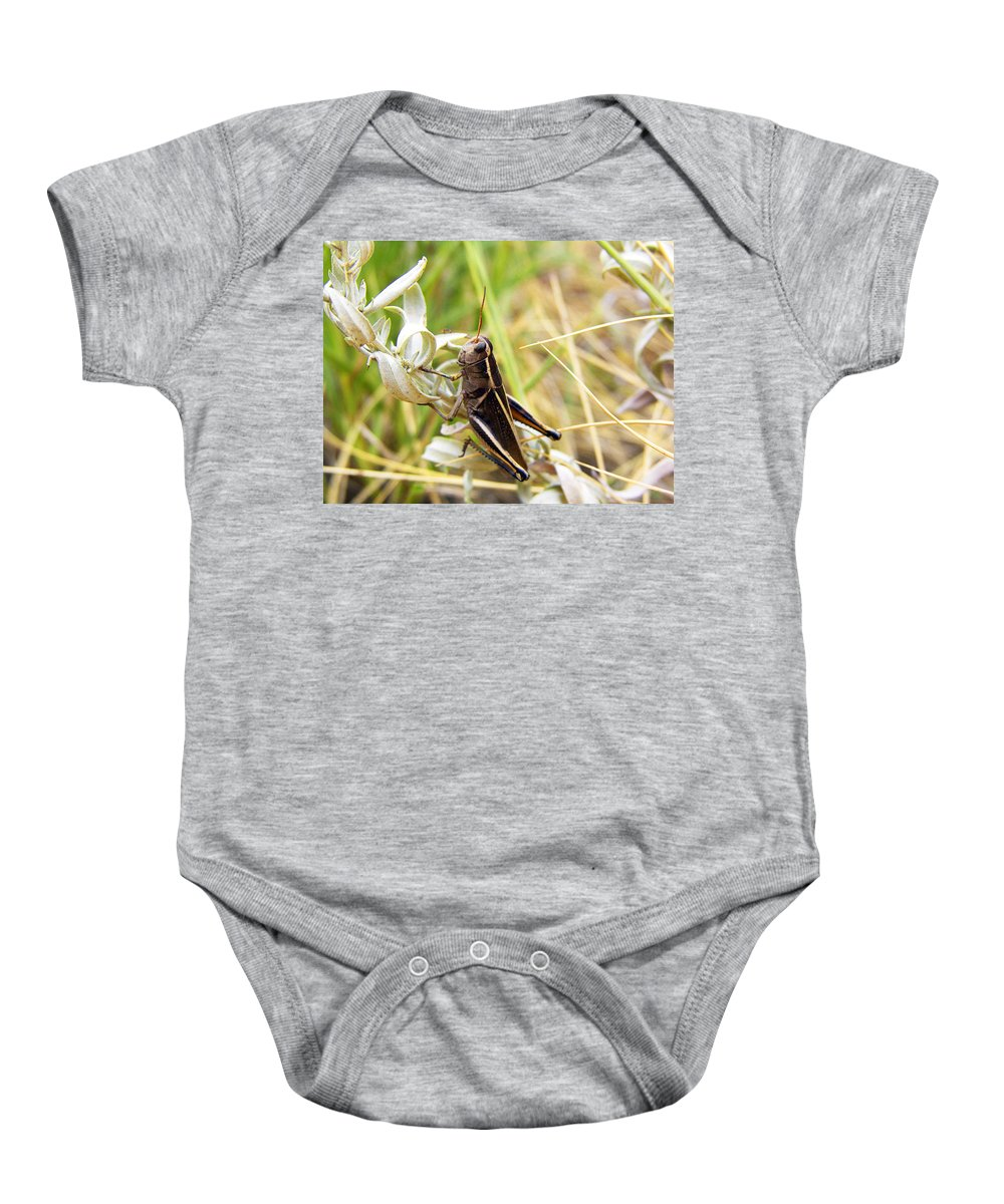Grasshopper Baby Onesie featuring the photograph Little Grasshopper 2 by Marilyn Hunt