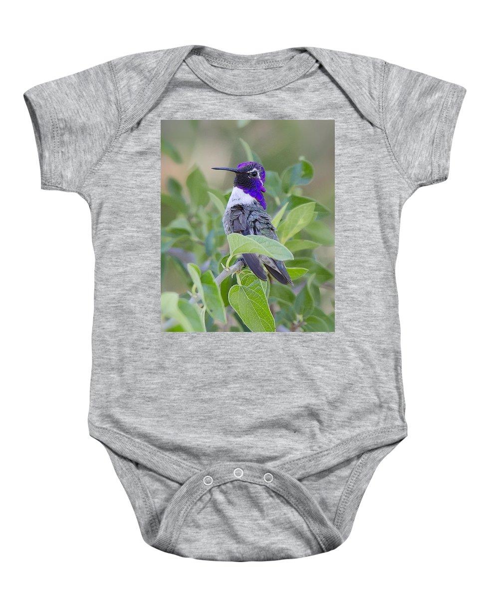 Costas Hummingbird Baby Onesie featuring the photograph Little Treasure by Saija Lehtonen