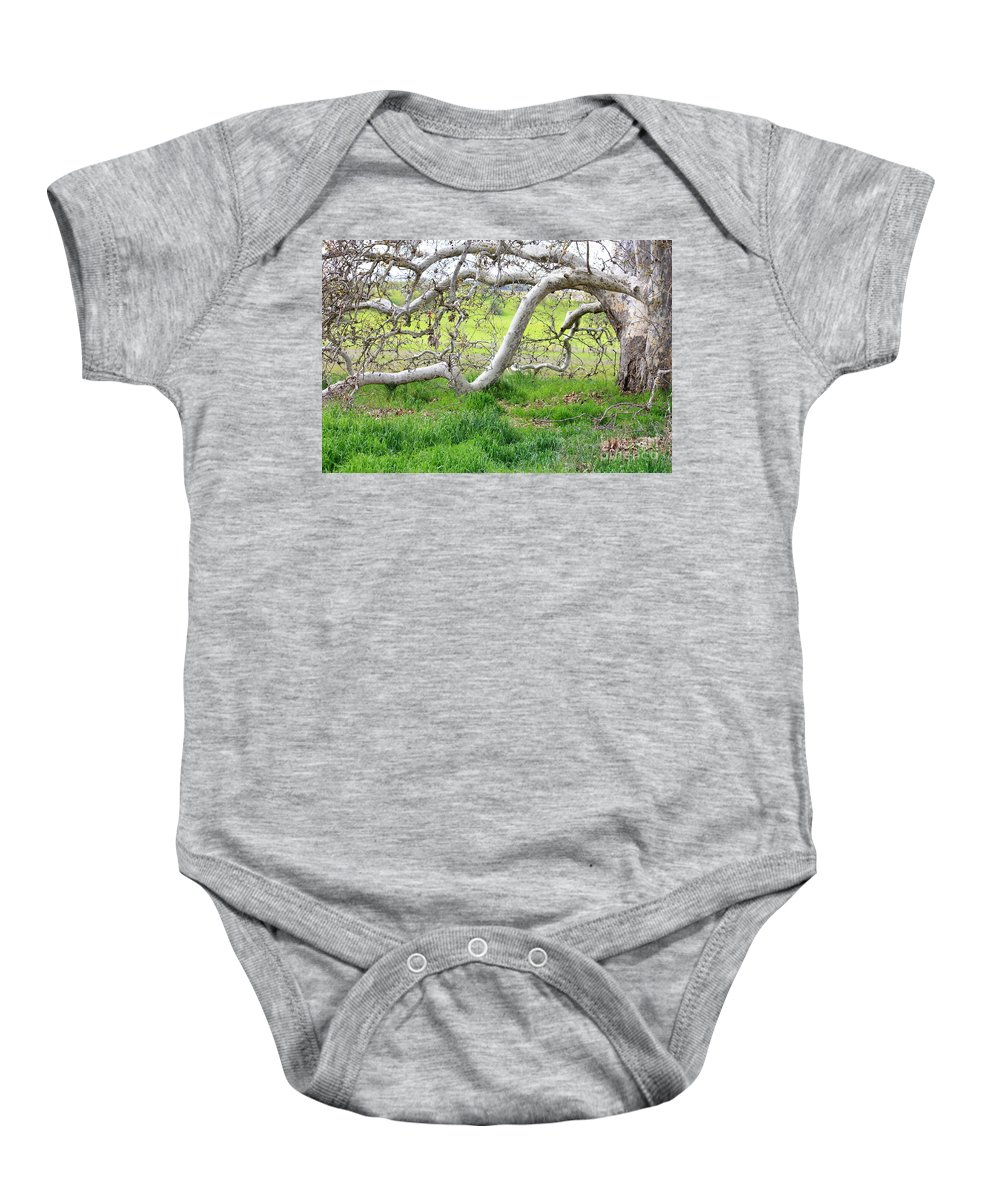 Landscape Baby Onesie featuring the photograph Low Branches On Sycamore Tree by Carol Groenen