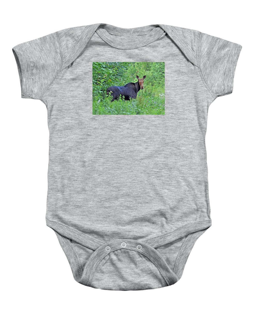 Maine Baby Onesie featuring the photograph Maine Moose by Glenn Gordon