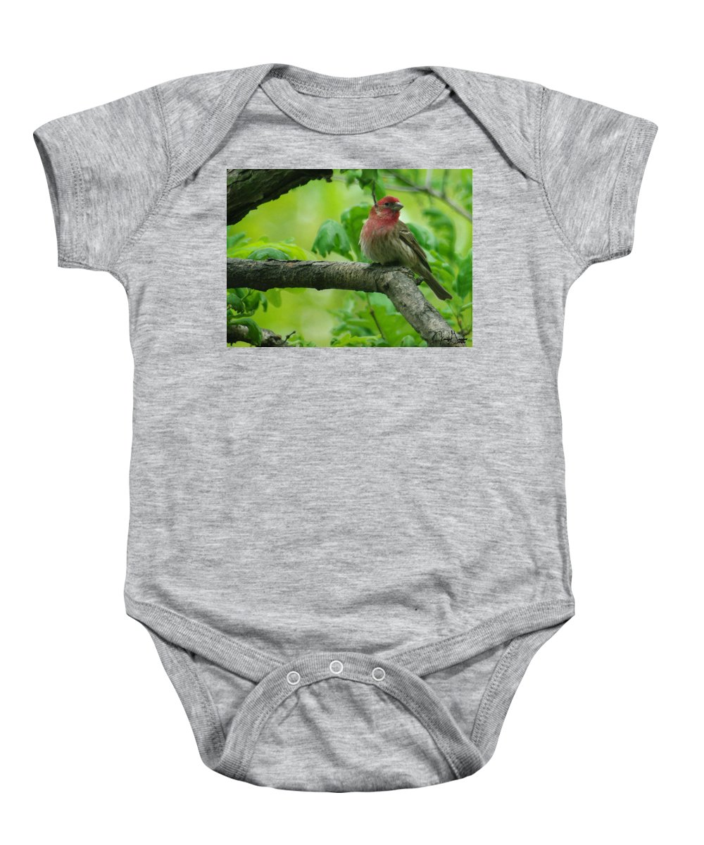 Jenny Gandert Baby Onesie featuring the photograph Male House Finch by Jenny Gandert