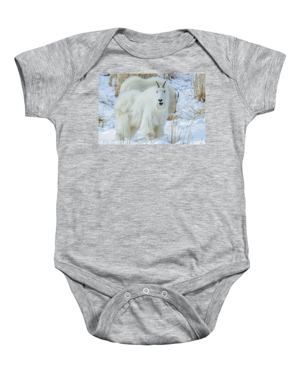 Mountain Goats Baby Onesie featuring the photograph March Madness by Yeates Photography