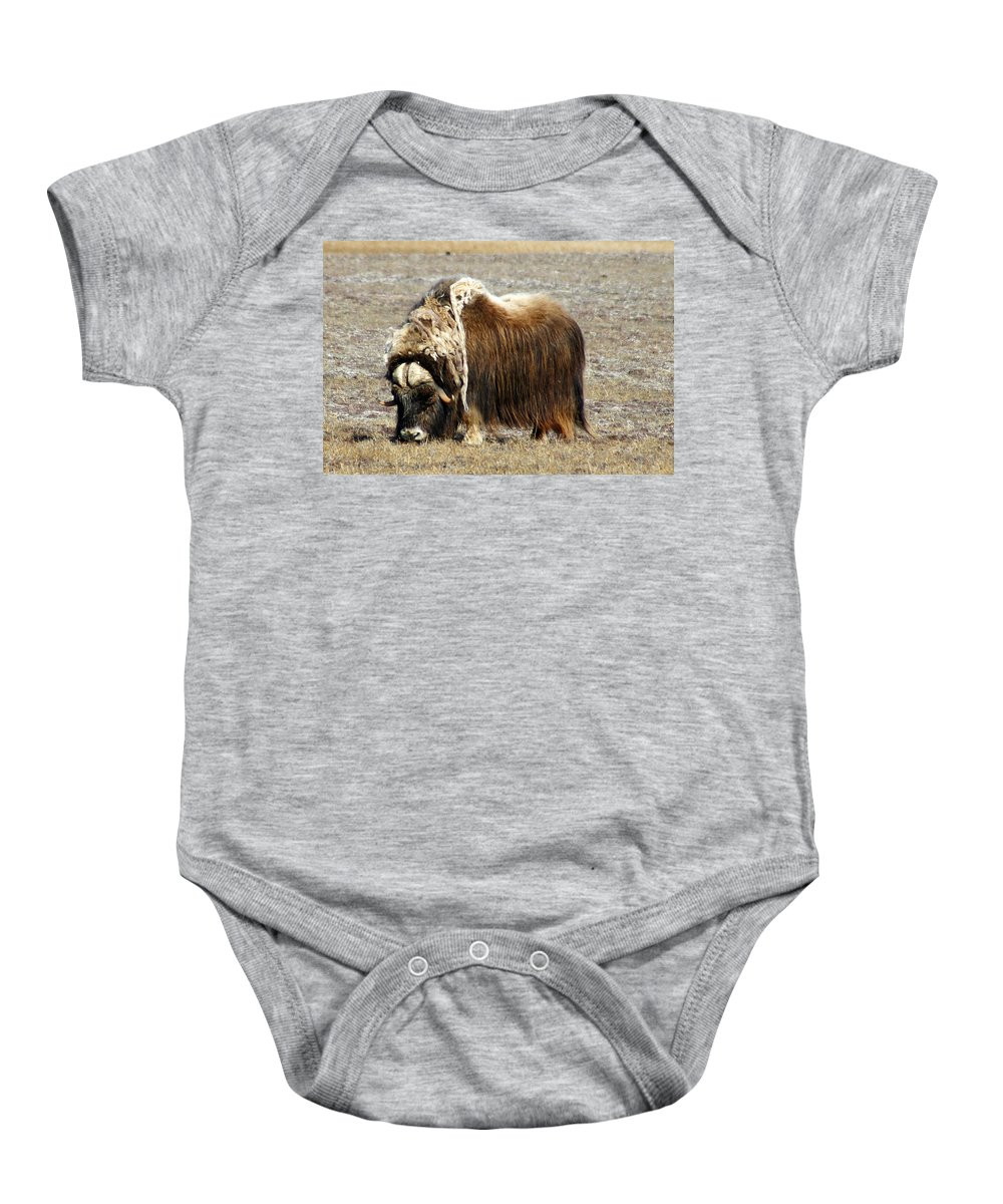 Musk Ox Baby Onesie featuring the photograph Musk Ox by Anthony Jones