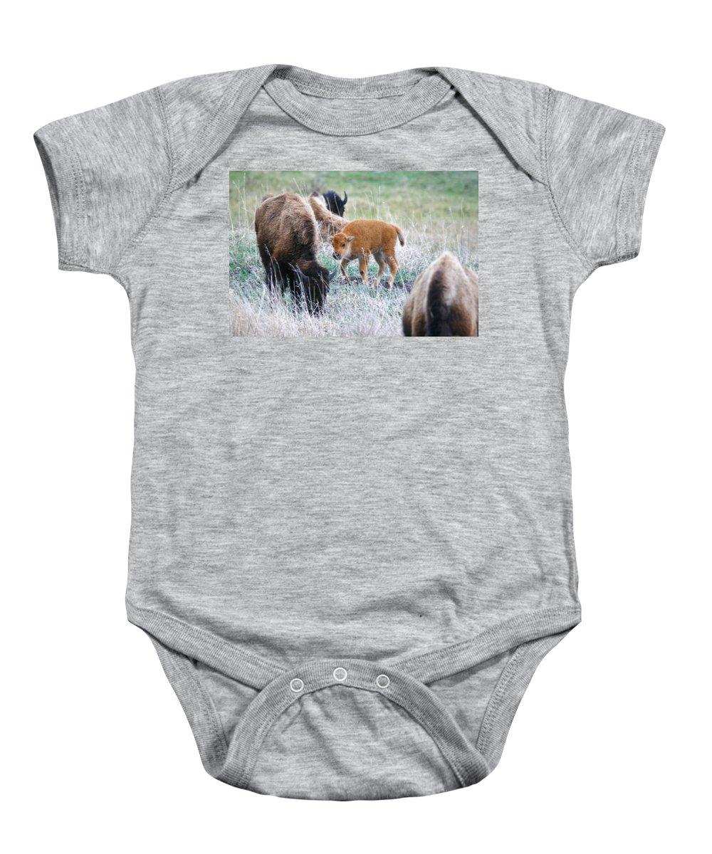 Baby Bison Baby Onesie featuring the photograph New Begining by Karen Jones