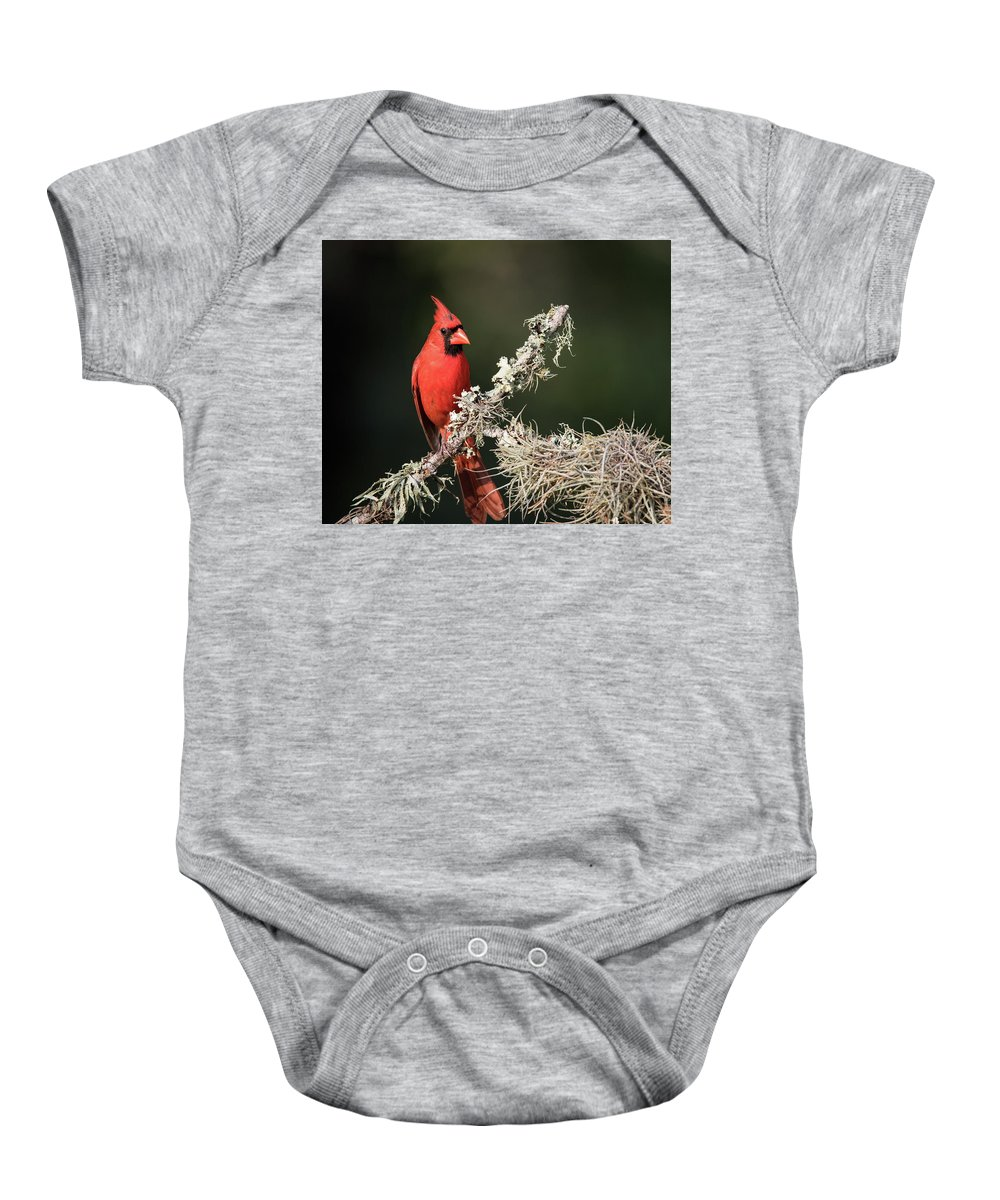 Smithville Baby Onesie featuring the photograph Northern Cardinal In Repose by JG Thompson