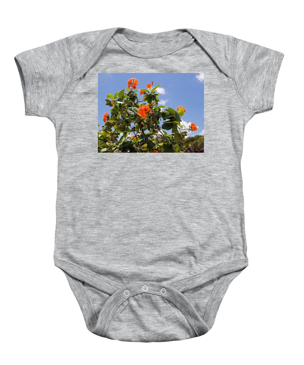 Hibiscus; Rosasinensis; Rosa; Sinensis; Rosa-sinensis; Tree; Bush; Shrub; Plant; Flower; Flowers; Fl Baby Onesie featuring the photograph Orange Hibiscus With Fruit On The Indian River In Florida by Allan Hughes