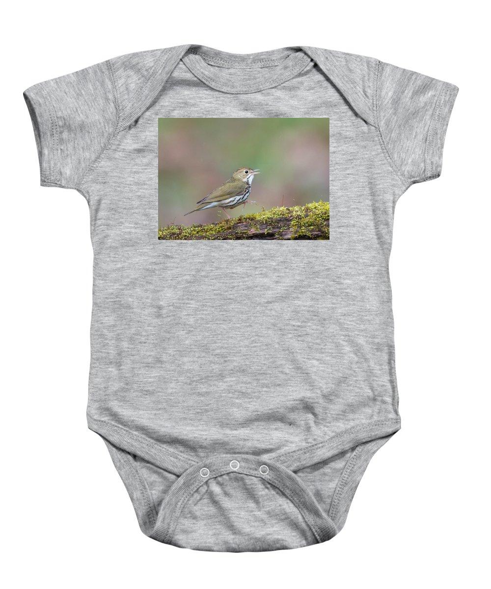 Ovenbird Baby Onesie featuring the photograph Ovenbird by Tom Ingram
