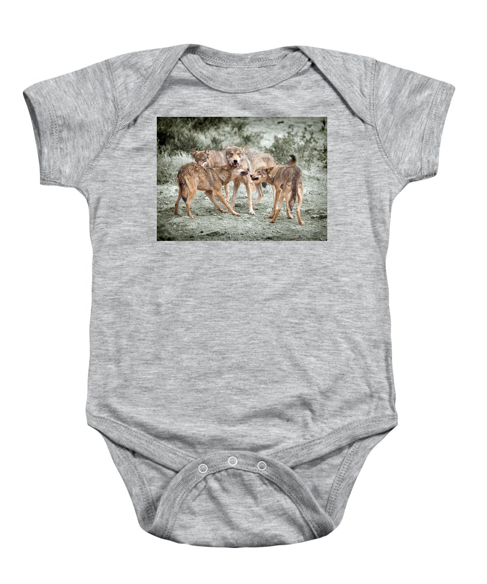 Wolf Baby Onesie featuring the photograph Pack Dispute by Mal Bray