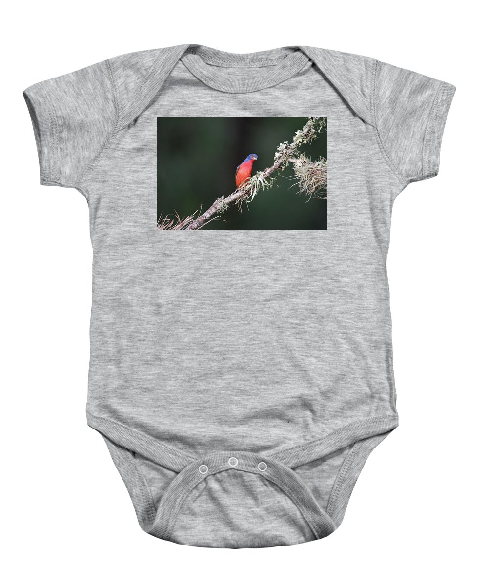 Smithville Baby Onesie featuring the photograph Painted Bunting Curiosity by JG Thompson