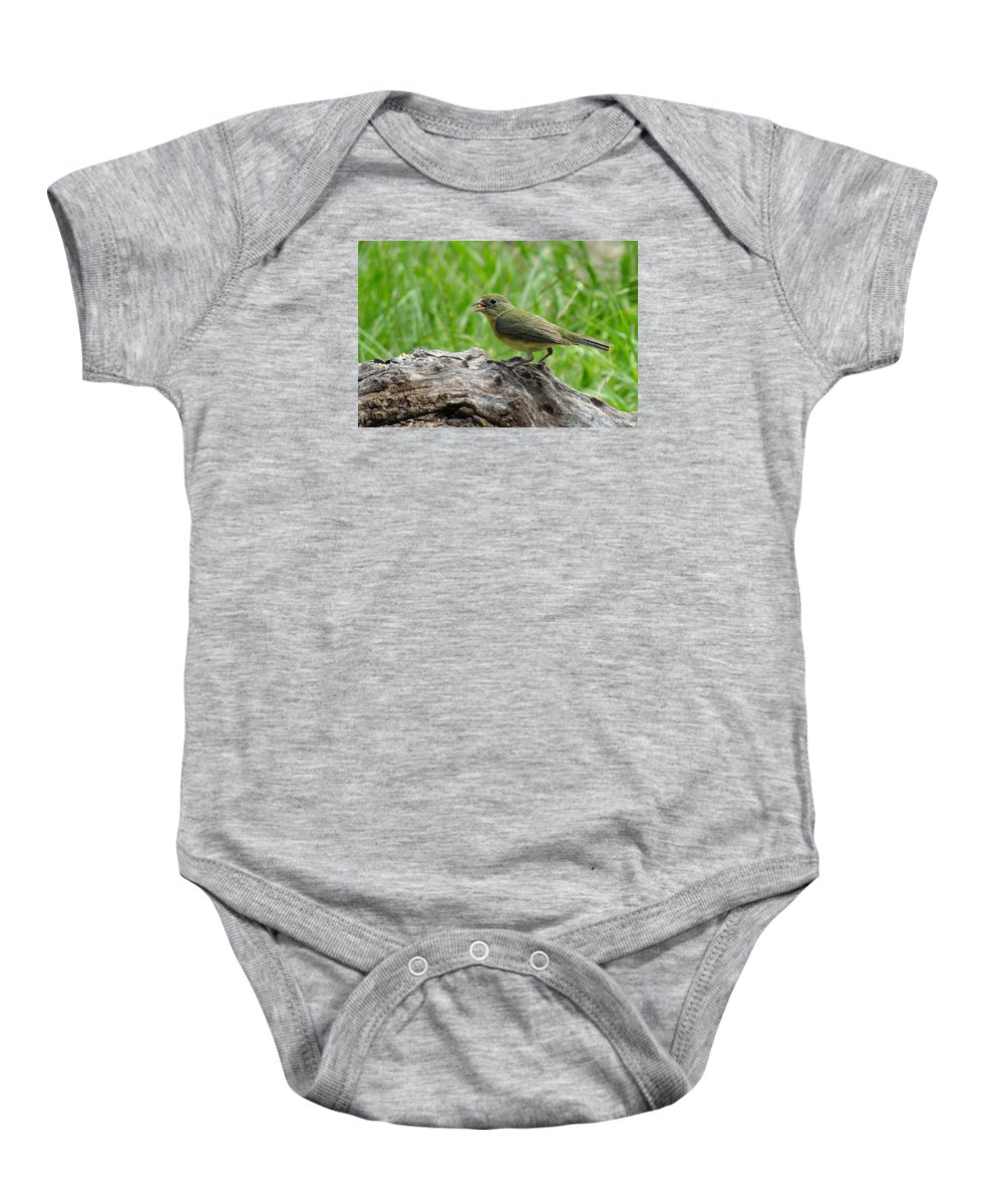 Painted Bunting Baby Onesie featuring the photograph Painted Bunting - Feeding Female by Bill Morgenstern