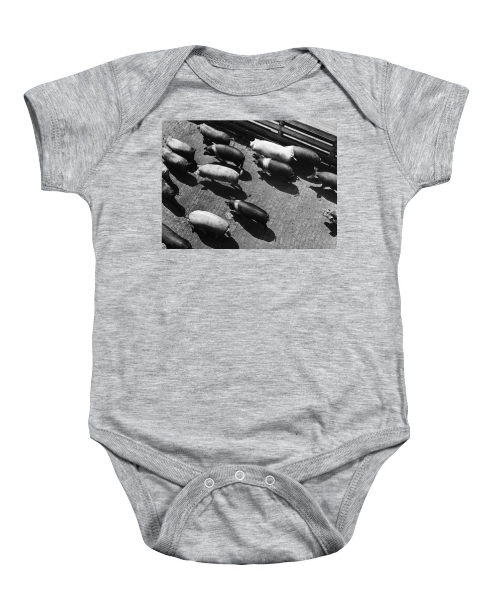 20th Century Baby Onesie featuring the photograph Pigs Being Corralled by Granger