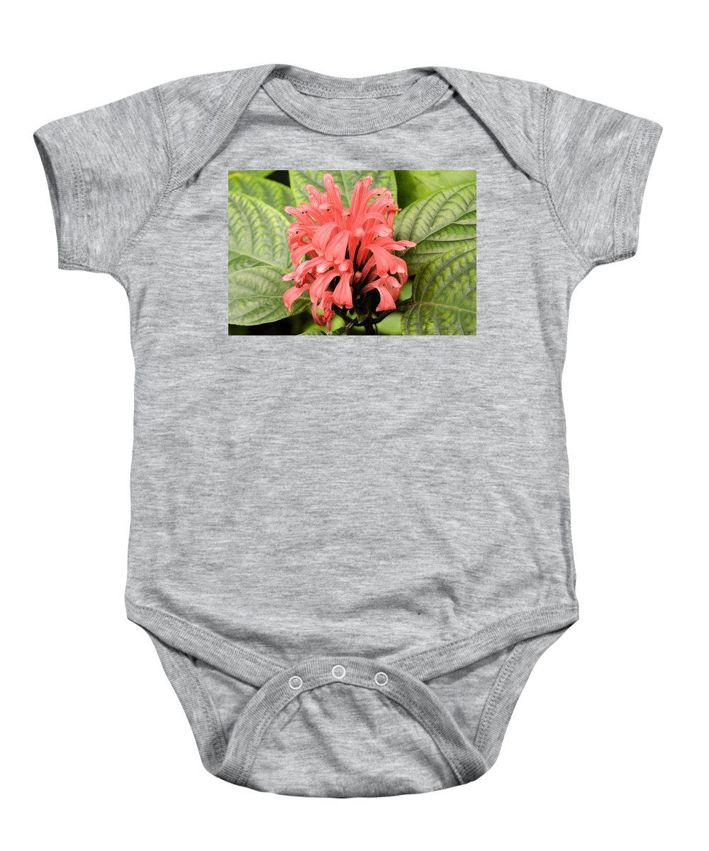 upside Down Baby Onesie featuring the photograph Pink Trendles by Wendy Fox