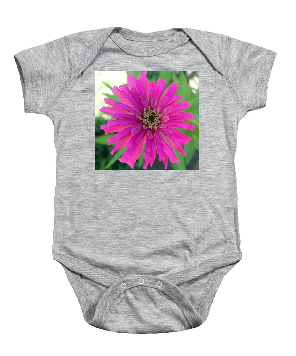 Zinnia; Flower; Pink; Translucent; Transparent; Florida; Petals; Garden; Zinnia; Agustifolia; Flower Baby Onesie featuring the photograph Pink Zinnia In Florida by Allan Hughes