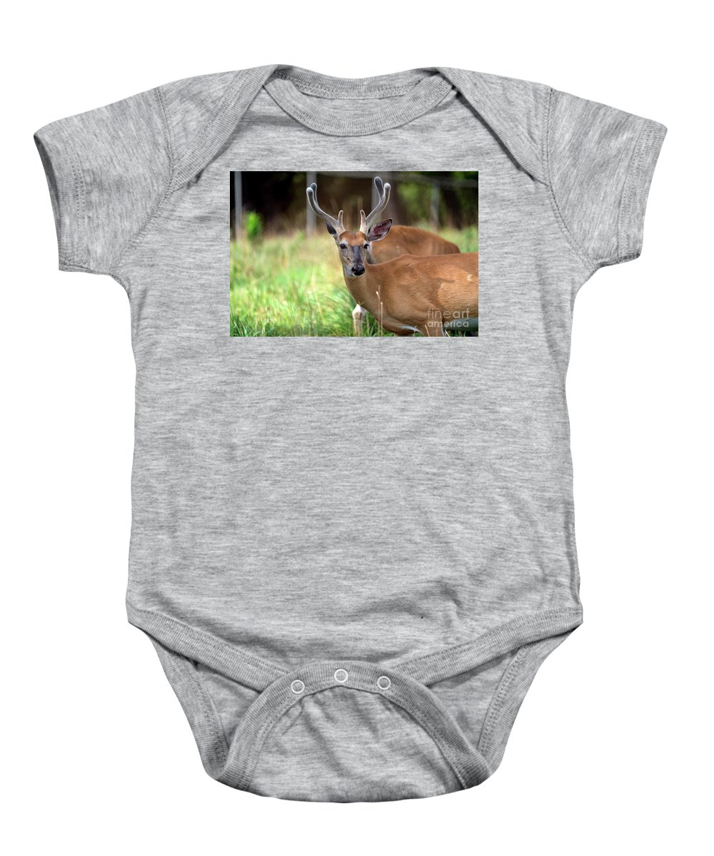 Deer Baby Onesie featuring the photograph Portrait Of A Beautiful Buck by Sam Rino