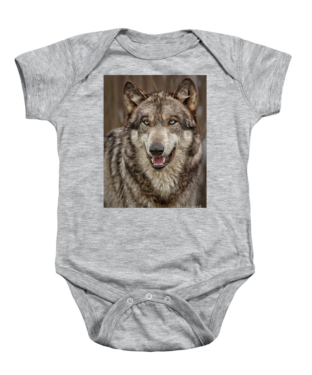Wolf Gray Wolf Lone Wolf Wolves Fine Art Print Nature Fur Baby Onesie featuring the photograph Portrait Of Gray Wolf by Sherry Butts