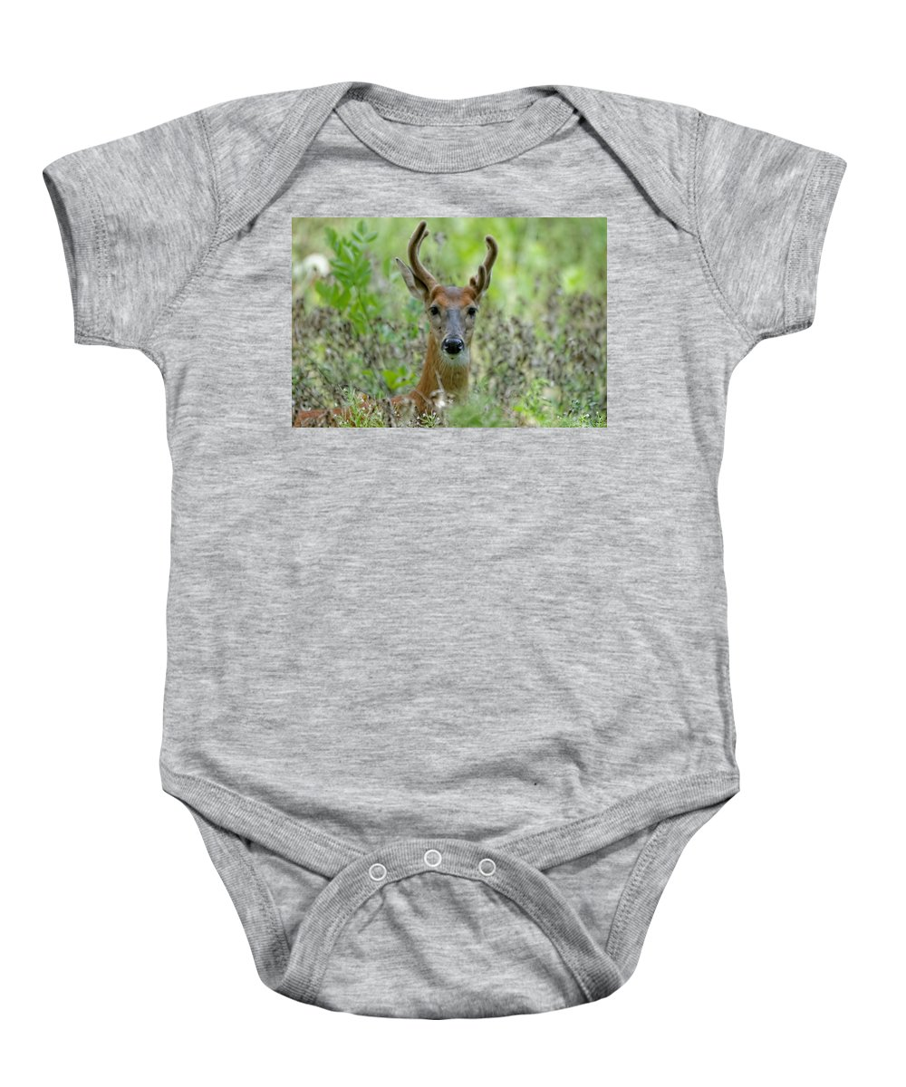 Deer Baby Onesie featuring the photograph Portriat Of Male Deer by Peter Ponzio