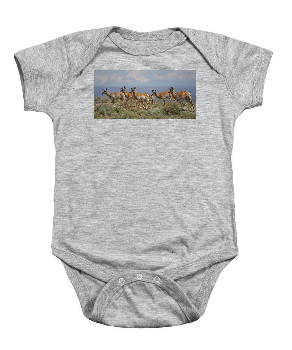 Pronghorn Baby Onesie featuring the photograph Pronghorn Antelope Running by Heather Coen