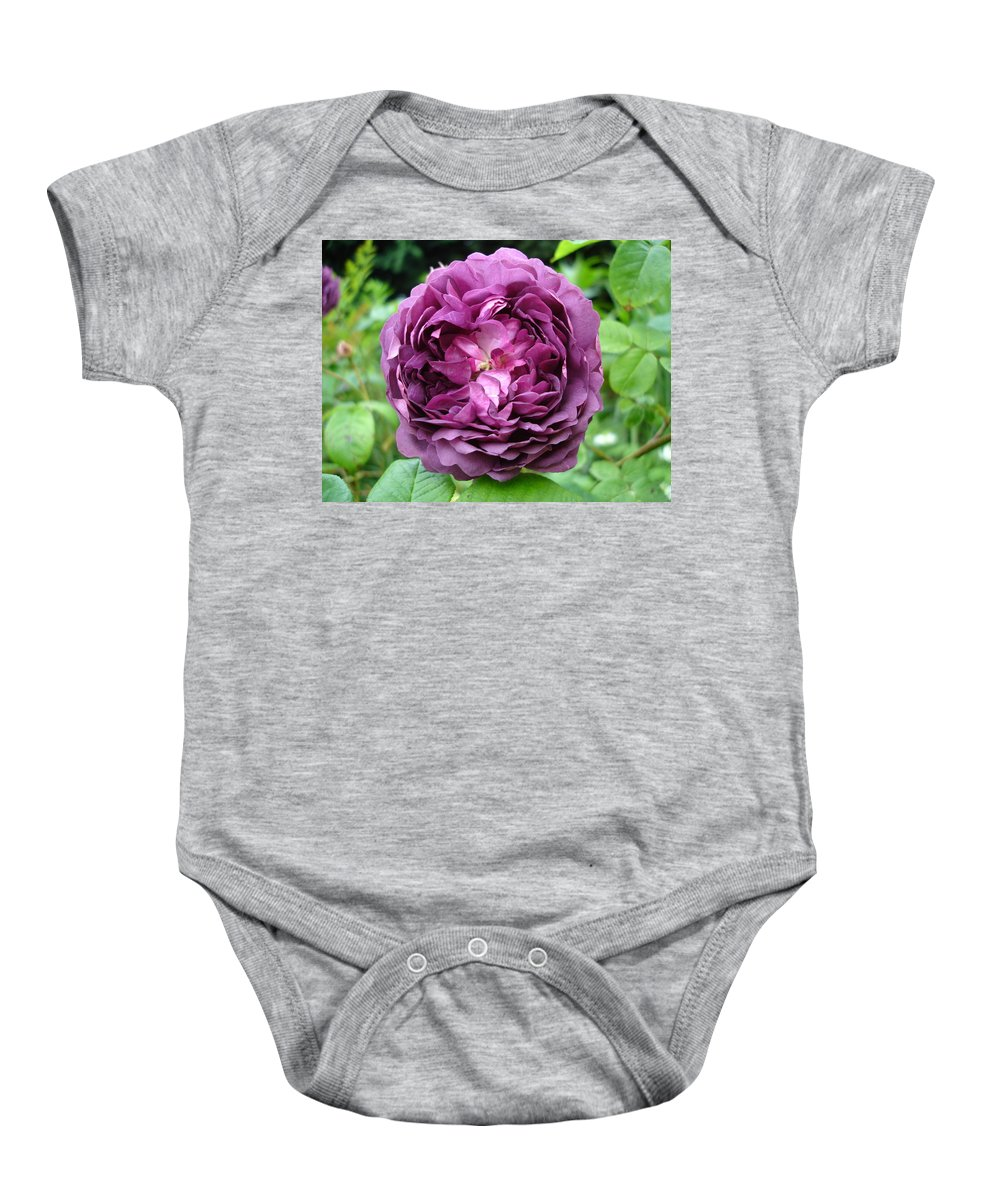 Rose Baby Onesie featuring the photograph Purple English Rose by Susan Baker