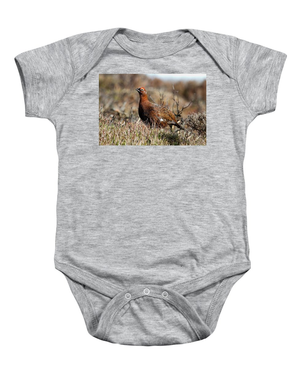 Red Grouse Baby Onesie featuring the photograph Red Grouse by Bob Kemp