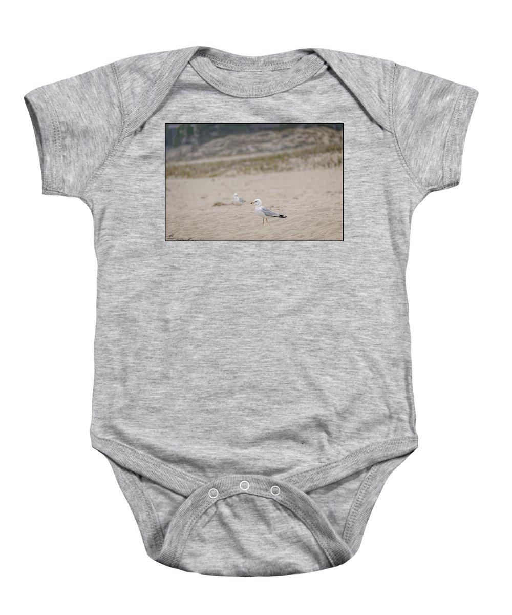 Ring - Billed Gull Baby Onesie featuring the photograph Ring - Billed Gull by LeeAnn McLaneGoetz McLaneGoetzStudioLLCcom