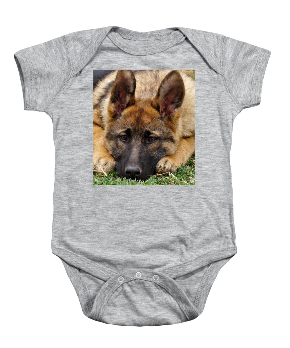 German Shepherd Baby Onesie featuring the photograph Sable German Shepherd Puppy by Sandy Keeton