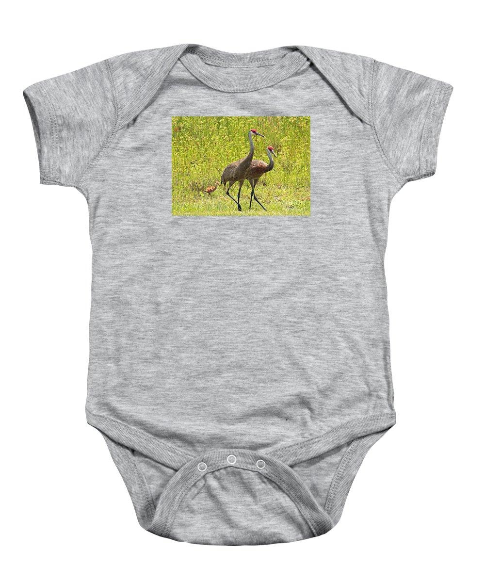 Sandhill Cranes Baby Onesie featuring the photograph Sandhill Crane Family by Carol Groenen