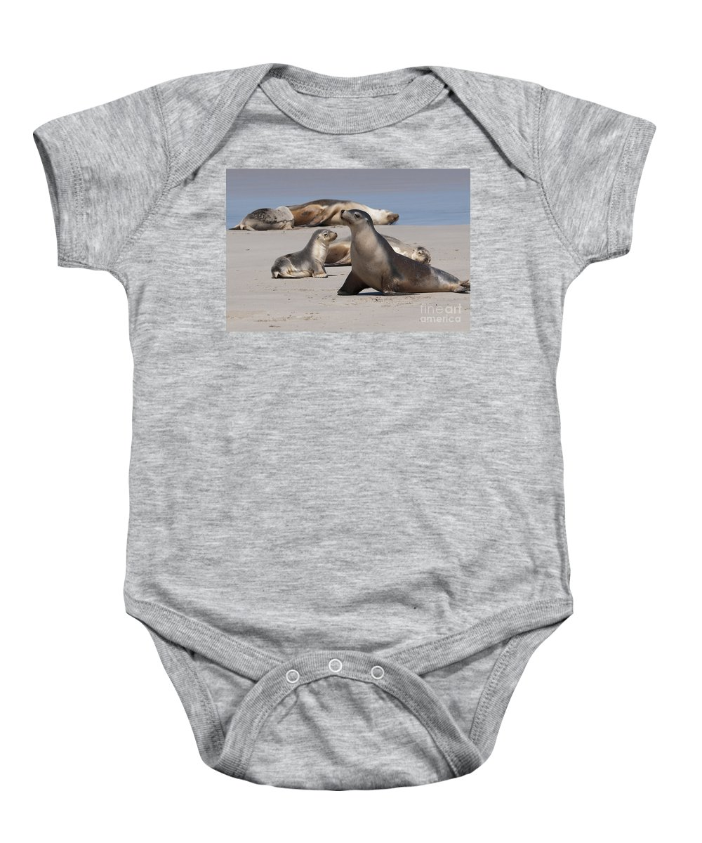 Sea Lion Baby Onesie featuring the photograph Sea Lions by Werner Padarin