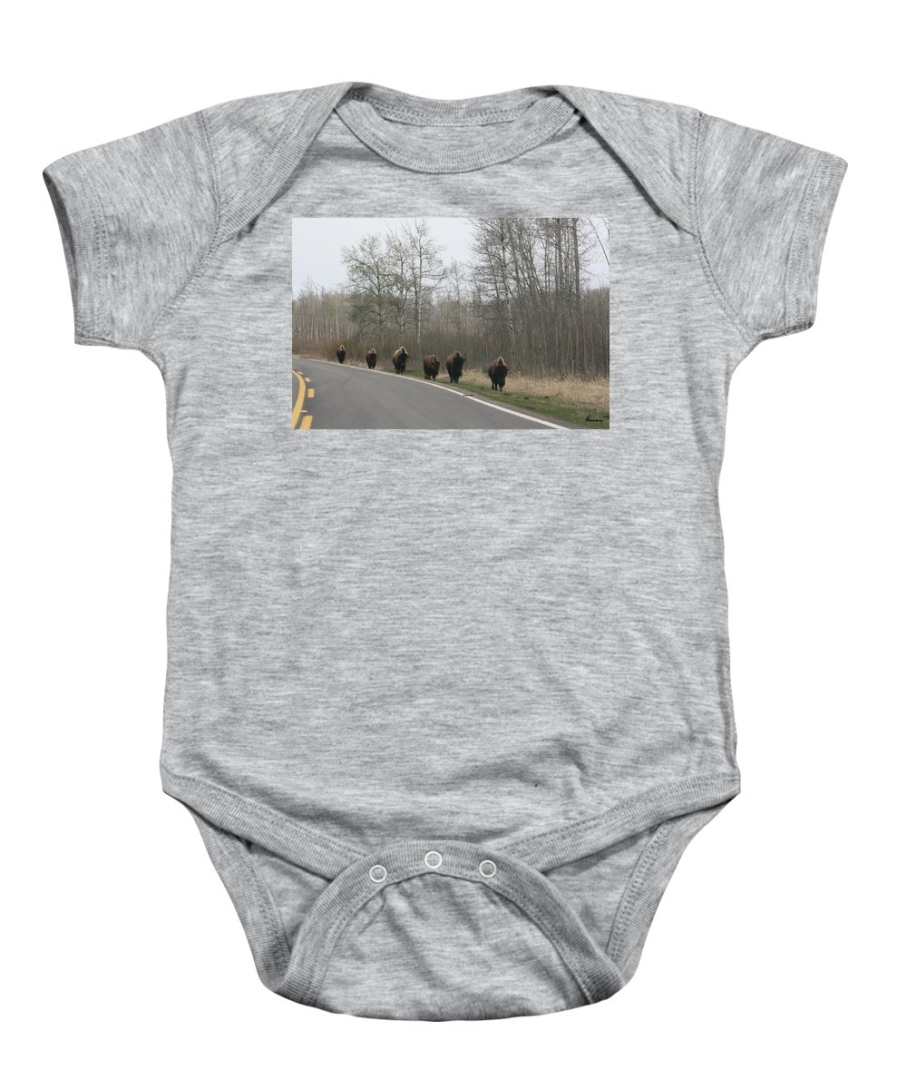 Buffalo Bison Herd Roaming National Park Edmonton Ab Elk Island Baby Onesie featuring the photograph Single File Now by Andrea Lawrence